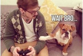 gamer-dog-funny