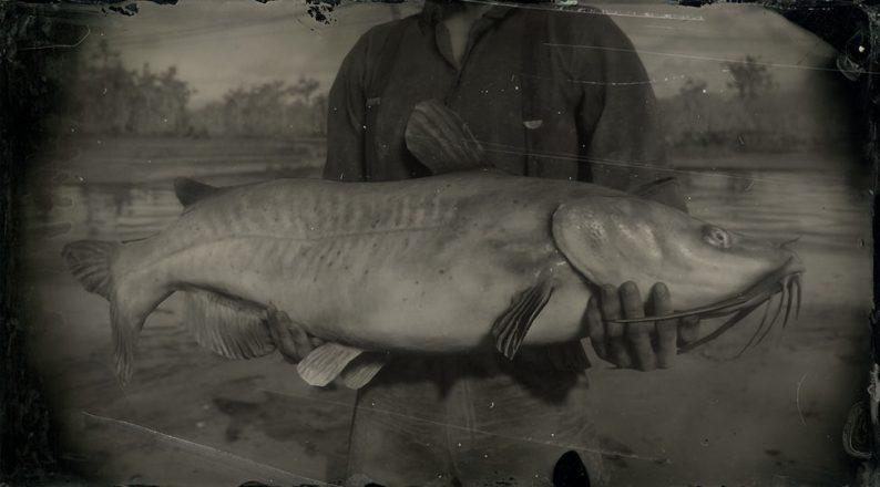 channel-catfish